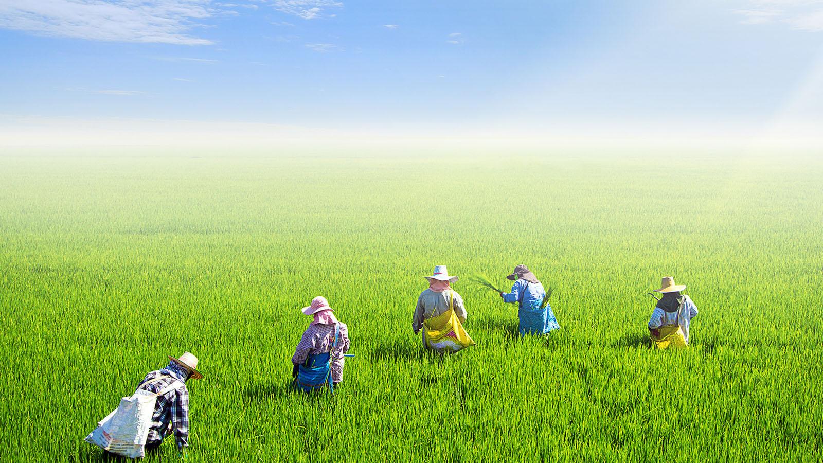 ร่วมสร้างสังคมเกษตรอินทรีย์ วิถีความสุขที่ยั่งยืน | ออมสุข-วิสาหกิจเพื่อชุมชม